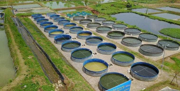 .analisa usaha budidaya udang vaname di kolam terpal