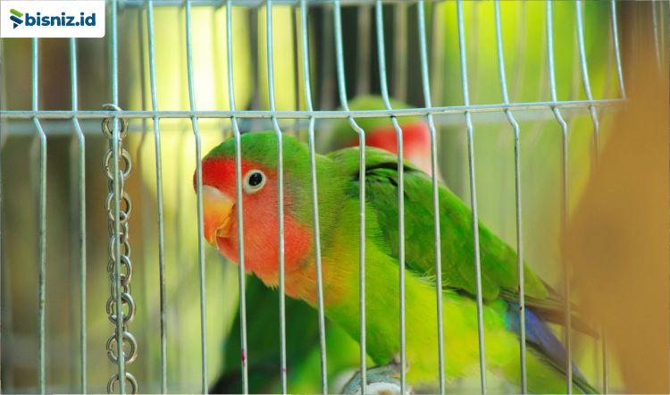 Usaha Ternak Burung Yang Menjanjikan Di Masa Depan