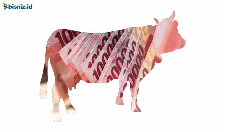 modal ternak sapi